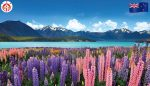 Top 10 New Zealand Hotels